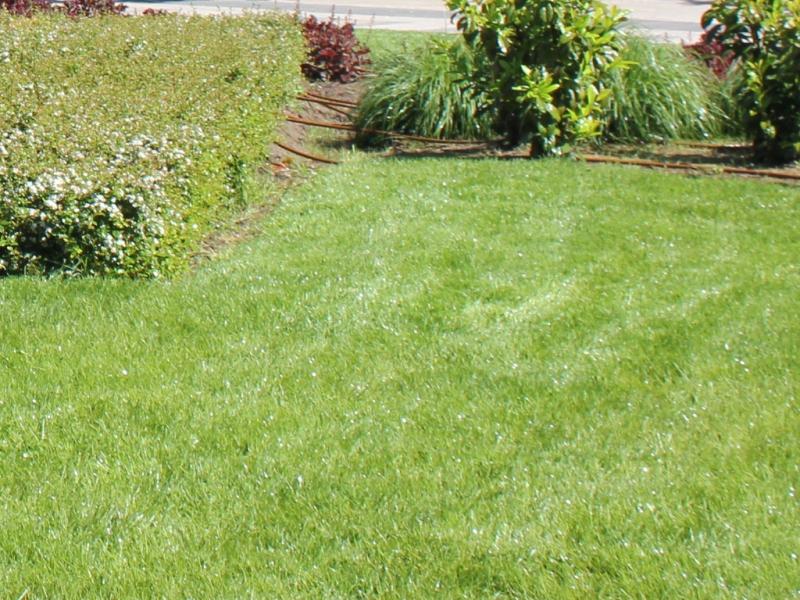 """""""Паркстрой"""" започва първото за годината косене на тревните площи"""